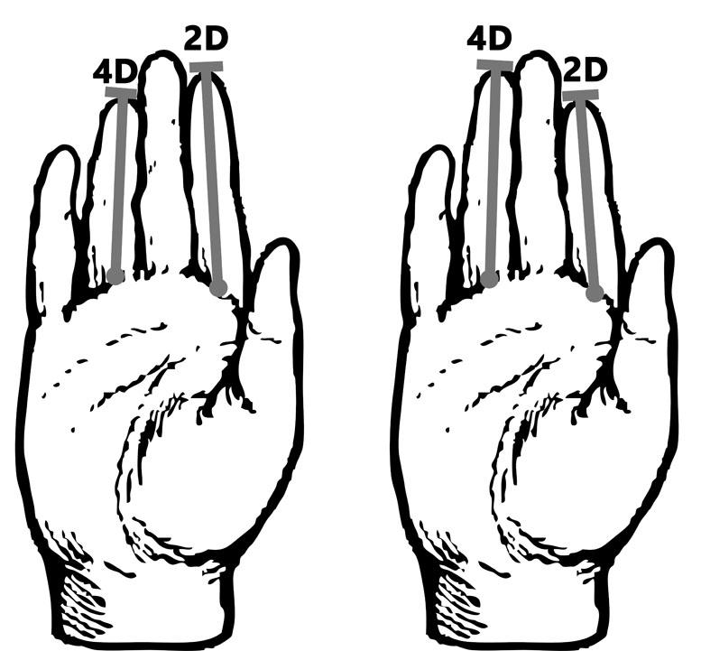 2D4D-Theorie_Handlesen_Chirologie
